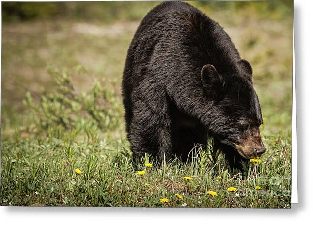 Greeting Card featuring the photograph Black Bear by Brad Allen Fine Art