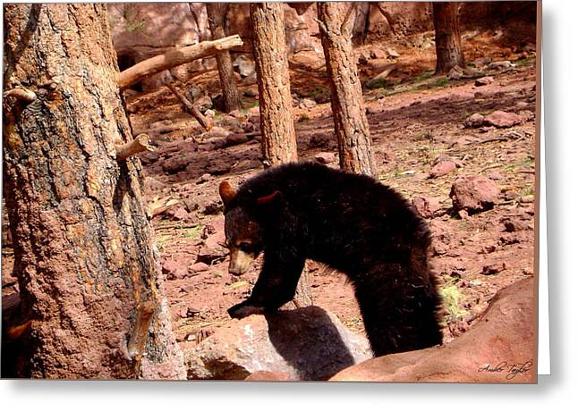 Black Bear Cub Greeting Card by Amber Taylor