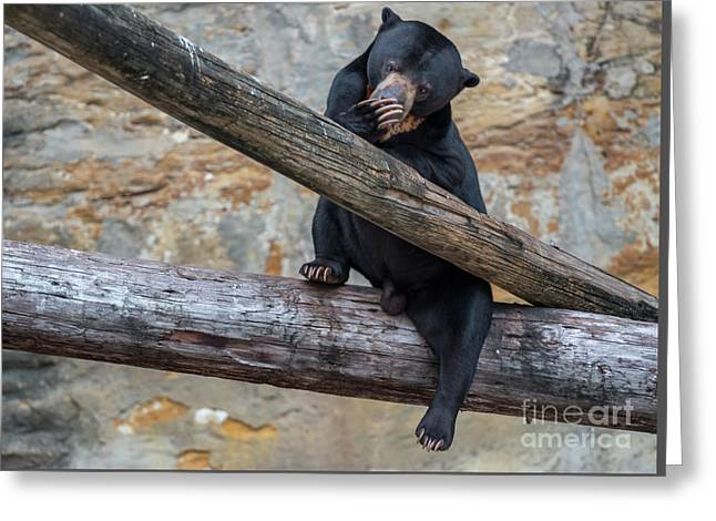 Black Bear Cub Sitting On Tree Trunk Greeting Card