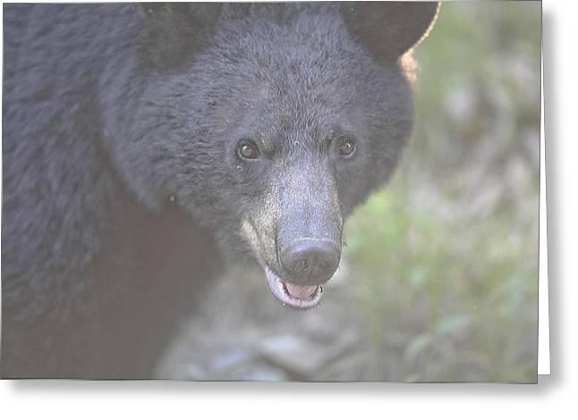 Black Bear  Greeting Card by Glenn Vidal