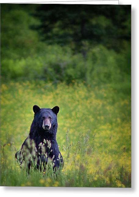 Black Bear Lookin At Me Greeting Card