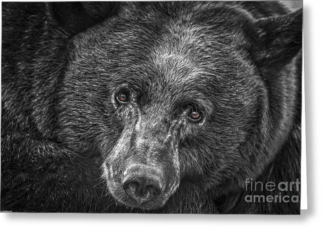Black Bear Portrait 3 Greeting Card