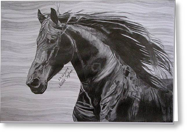 Black Beauty Greeting Card by Melita Safran