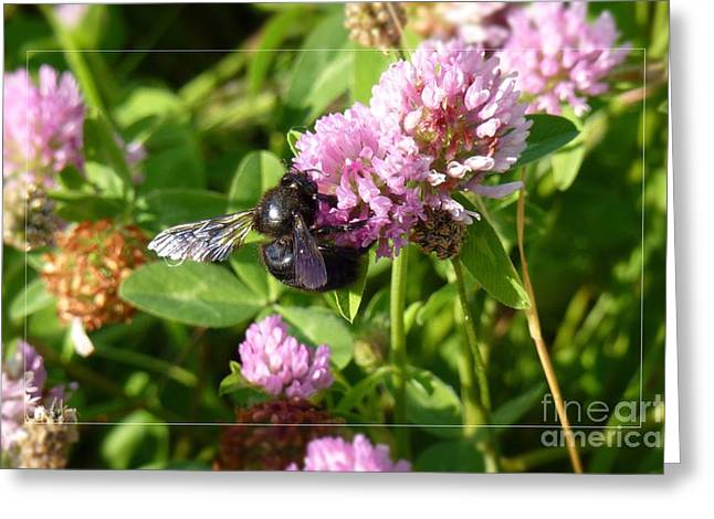 Black Bee On Small Purple Flower Greeting Card by Jean Bernard Roussilhe