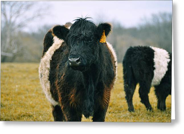 Black Belties Greeting Card by JAMART Photography