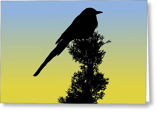 Black-billed Magpie Silhouette At Sunrise Greeting Card