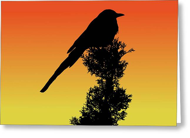 Black-billed Magpie Silhouette At Sunset Greeting Card