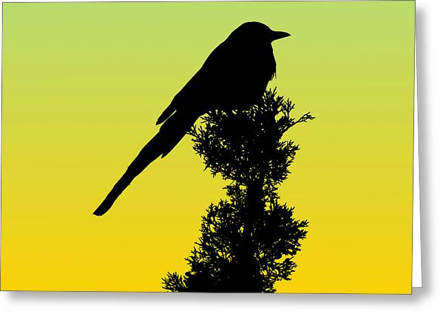 Black-billed Magpie Silhouette - Special Request Background Greeting Card