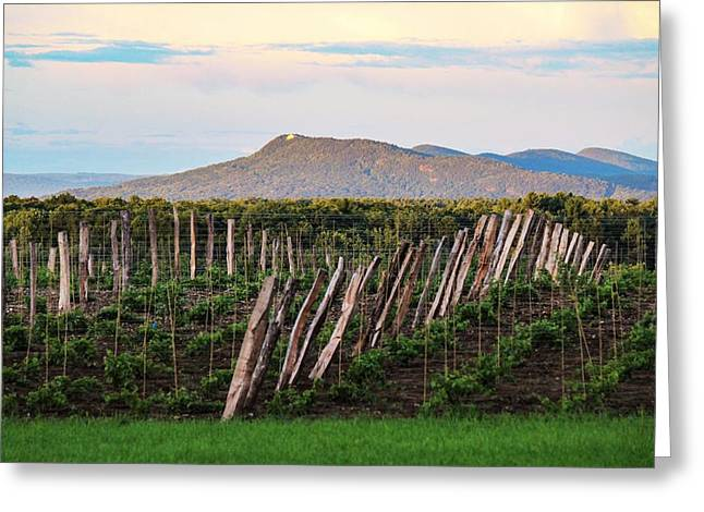Black Birch Vineyard And Summit House View Greeting Card