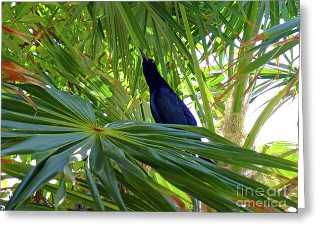 Greeting Card featuring the photograph Black Bird And Green Leaf by Francesca Mackenney