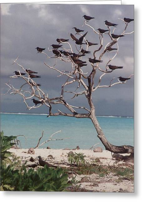 Greeting Card featuring the photograph Black Birds by Mary-Lee Sanders