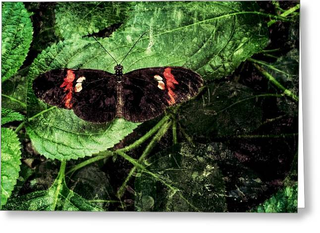 Black Butterfly Greeting Card by Kathleen Alhaug