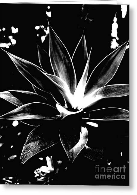 Black Cactus  Greeting Card