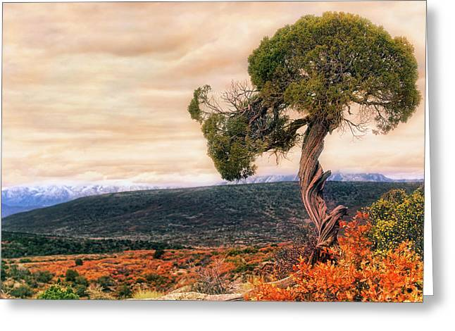 Greeting Card featuring the photograph Black Canyon Juniper - Colorado - Autumn by Jason Politte