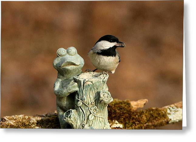 Black-capped Chickadee And Frog Greeting Card