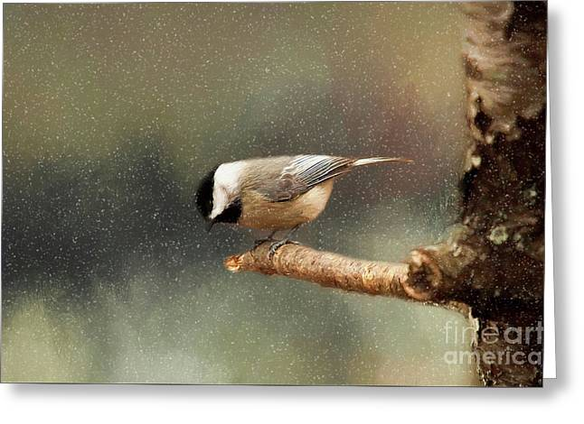Greeting Card featuring the photograph Black Capped Chickadee by Darren Fisher