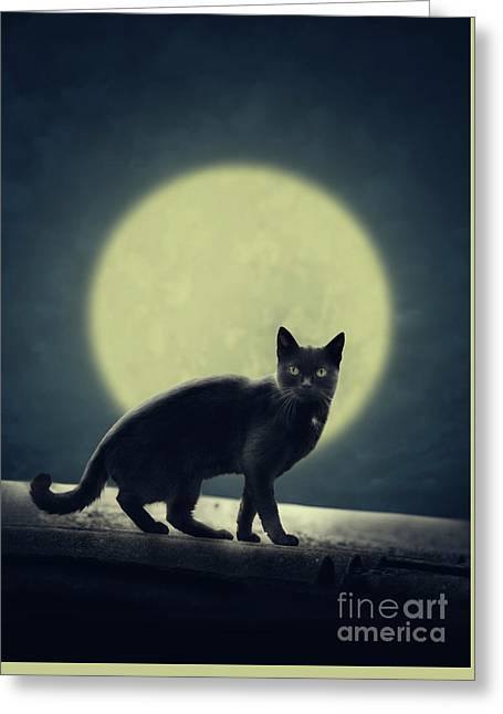 Black Cat And Full Moon Greeting Card by Jelena Jovanovic