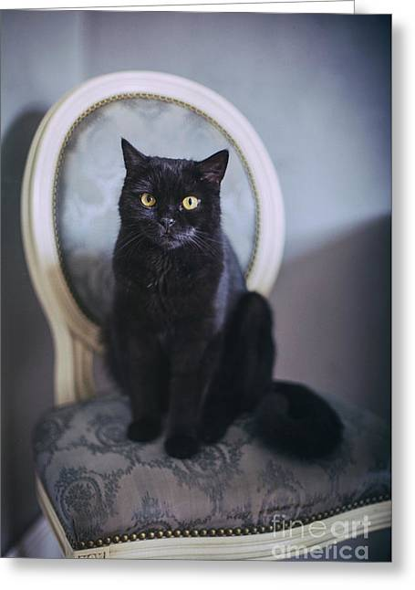 Black Cat Greeting Card by Anna Mutwil