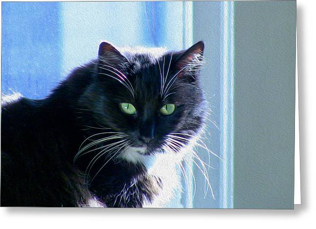 Black Cat In Sun Greeting Card