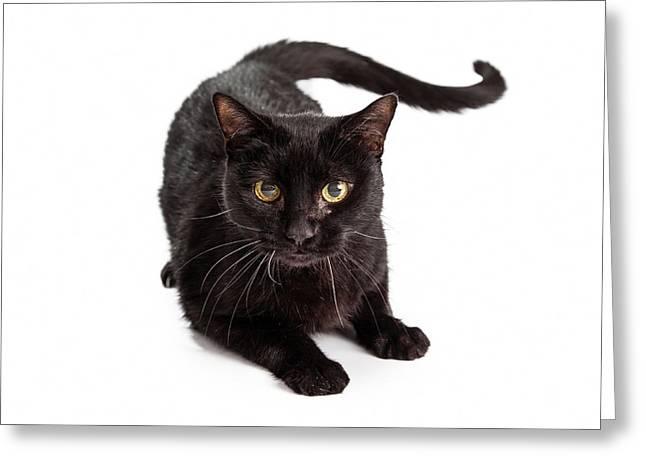 Black Cat Laying Looking At Camera Greeting Card by Susan Schmitz