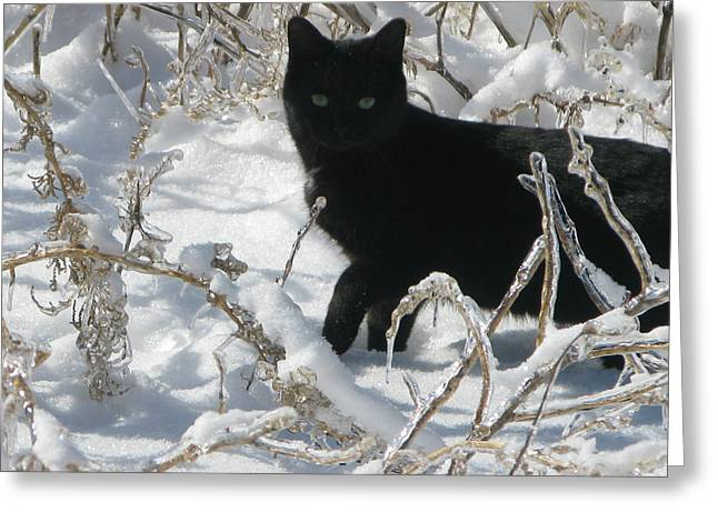 Black Cat Greeting Card by Martie DAndrea