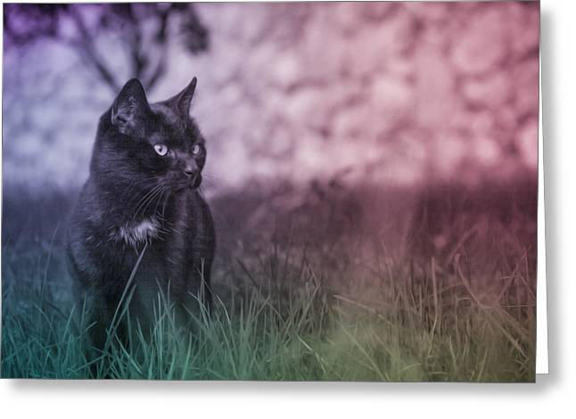 Black Cat Greeting Card by Silvia Bruno
