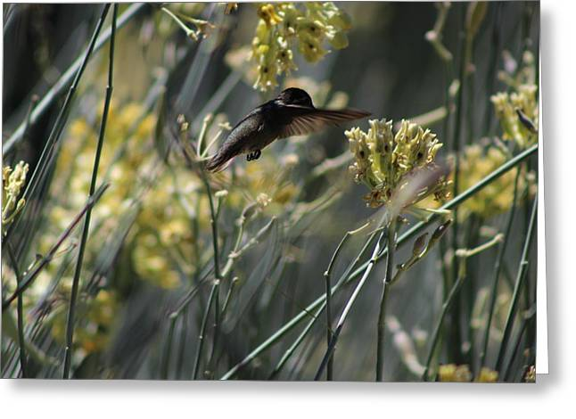 Black Chinned Hummingbird In Garden Greeting Card by Colleen Cornelius