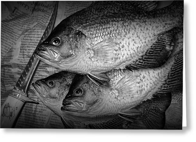 Black Crappie Panfish With Fish Filet Knife In Black And White Greeting Card