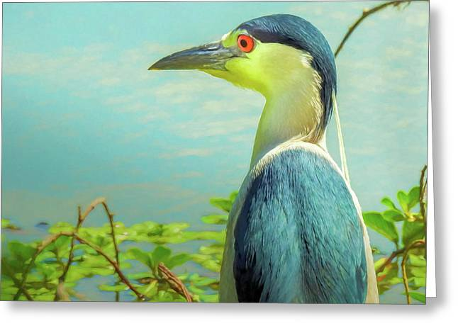 Black-crowned Night Heron Digital Art Greeting Card