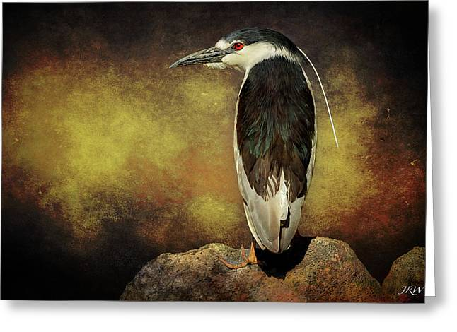 Black-crowned Night Heron Night Vision Greeting Card by John Williams