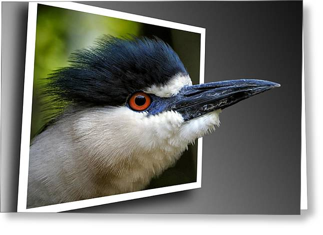 Black Crowned Night Heron Out Of Bounds Greeting Card