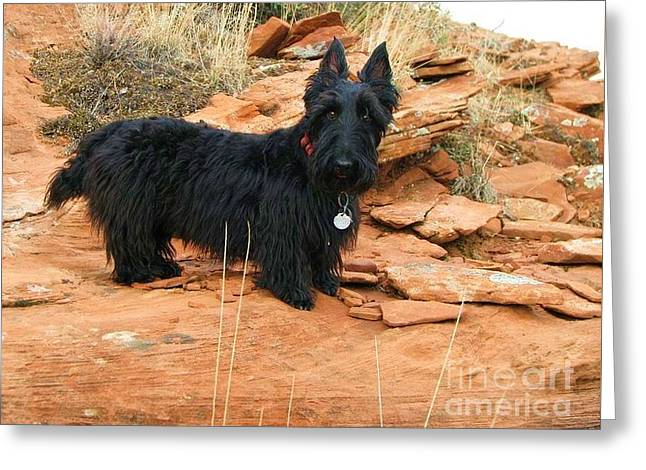 Black Dog Red Rock Greeting Card