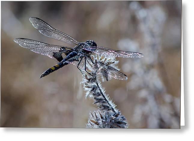 Black Dragonfly 2 Greeting Card