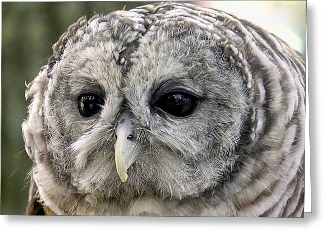 Black Eye Owl Greeting Card by Bob Slitzan