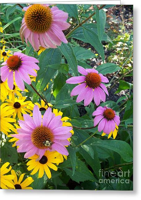 Black Eye Susans And Echinacea Greeting Card by Eric  Schiabor