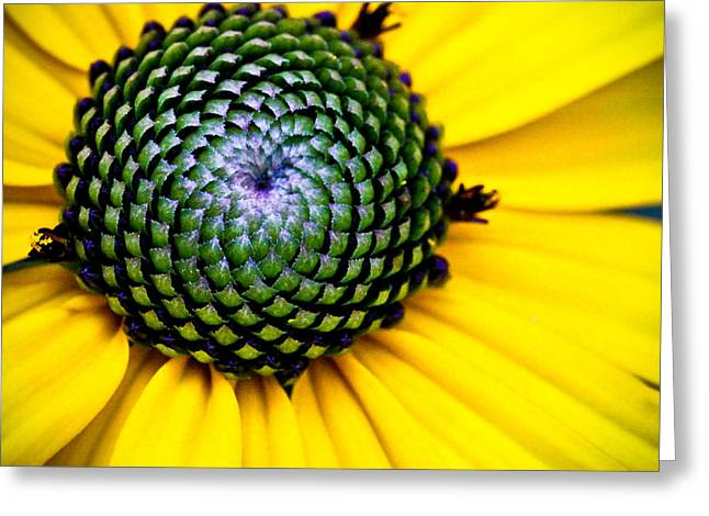 Black Eyed Susan Goldsturm Flower Greeting Card by Ryan Kelly