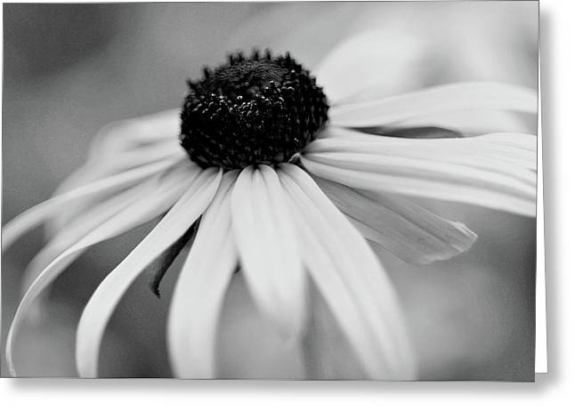 Black Eyed Susan Greeting Card by Michelle Joseph-Long