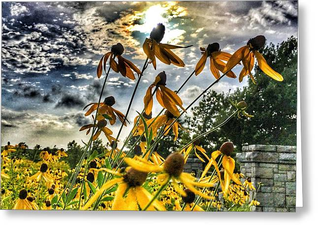 Greeting Card featuring the photograph Black Eyed Susan by Sumoflam Photography
