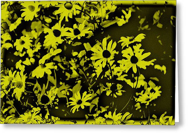 Black Eyed Susan's Greeting Card by Bill Cannon