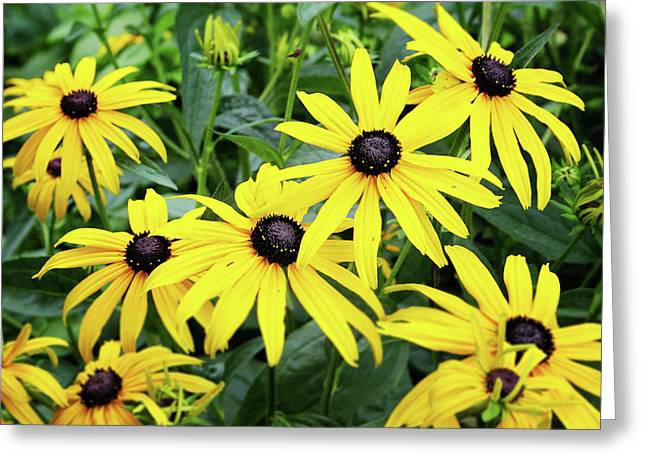 Black Eyed Susans- Fine Art Photograph By Linda Woods Greeting Card