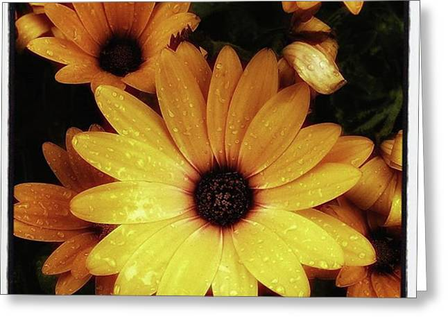 Greeting Card featuring the photograph Black Eyed Susans. Looks Like They're by Mr Photojimsf
