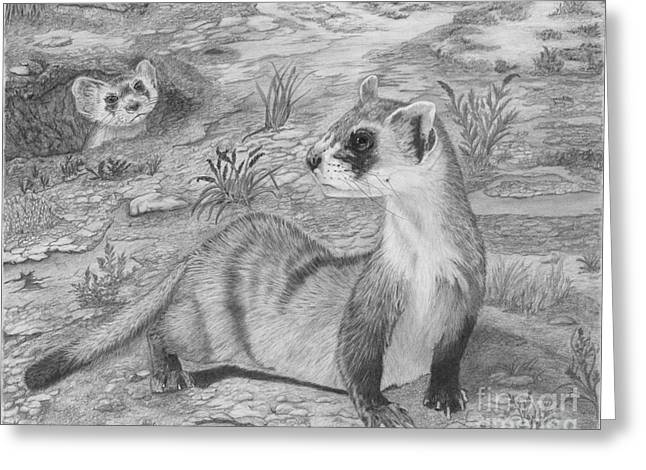 Black Footed Ferrets Greeting Card
