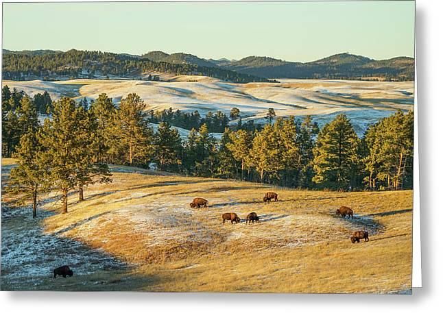 Black Hills Bison Before Sunset Greeting Card by Bill Gabbert