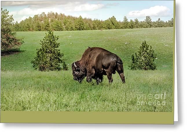 Black Hills Bull Bison Greeting Card by Robert Frederick