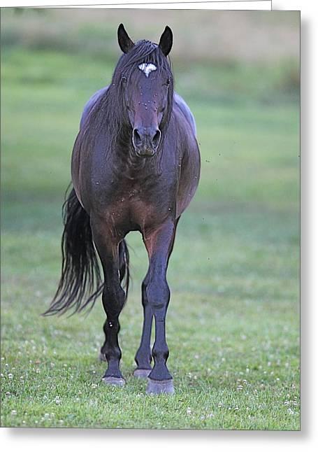 Black Horse Greeting Card by Glenn Vidal