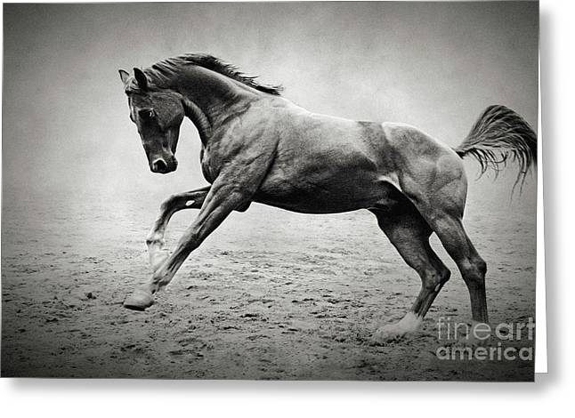 Black Horse In Dust Greeting Card