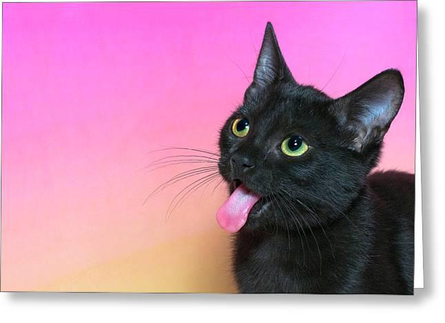 Black Kitten Says Yuck Greeting Card