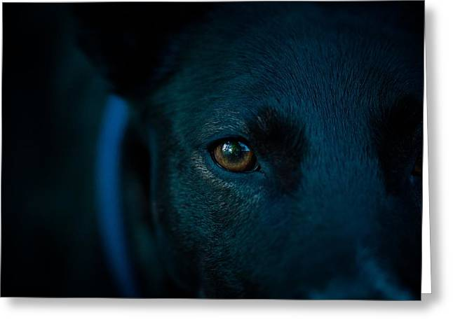 Black Lab Close Up Greeting Card by Cco