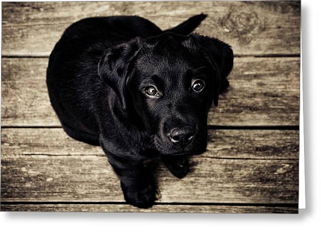 Black Lab Pup Greeting Card by Andre Spieker