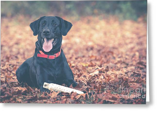 Black Labrador In The Fall Leaves Greeting Card